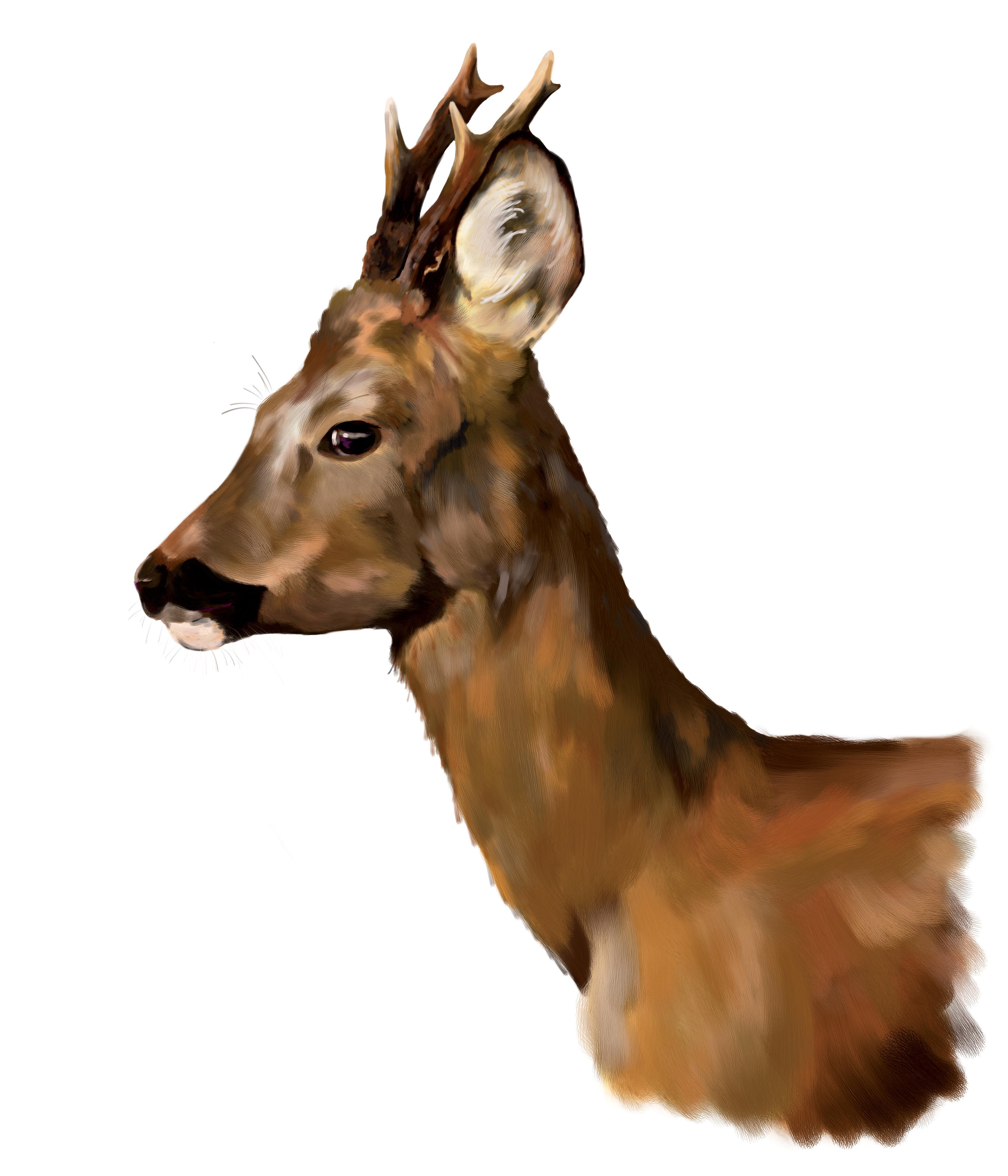 Calling Roe Deer Best Deer Call