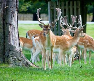deer-herd-13944819593Hc